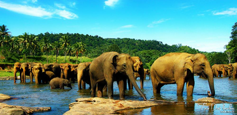 A small guide to your Holiday in Sri Lanka